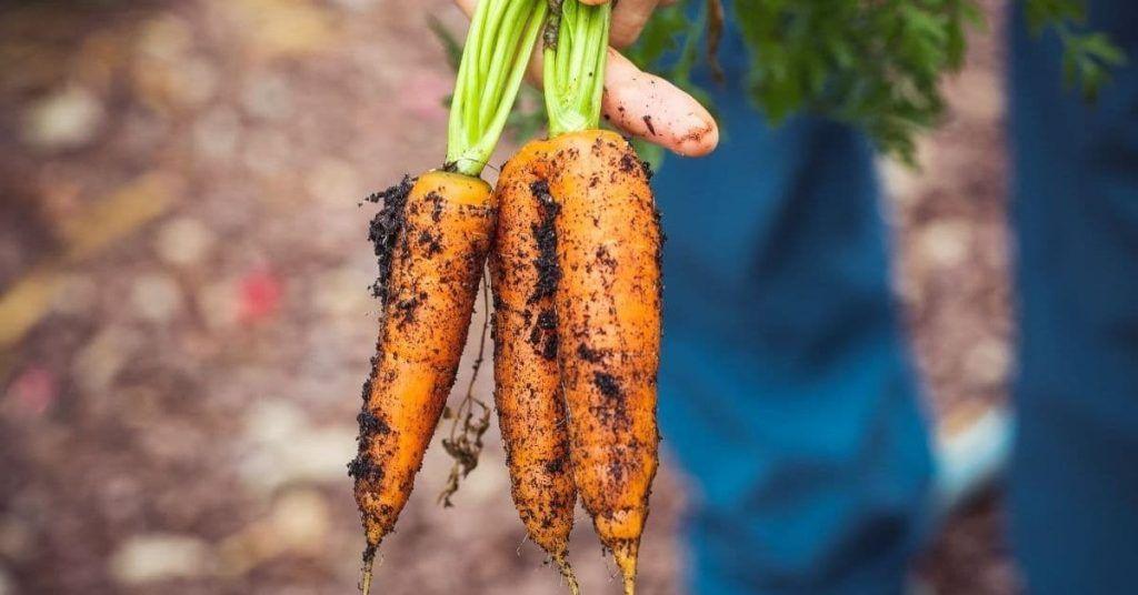 Alimentos orgánicos o ecológicos: son veganos?