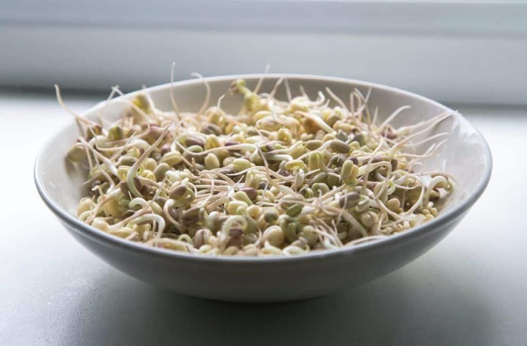 Qué son los germinados? UN plato lleno de salud y vida.