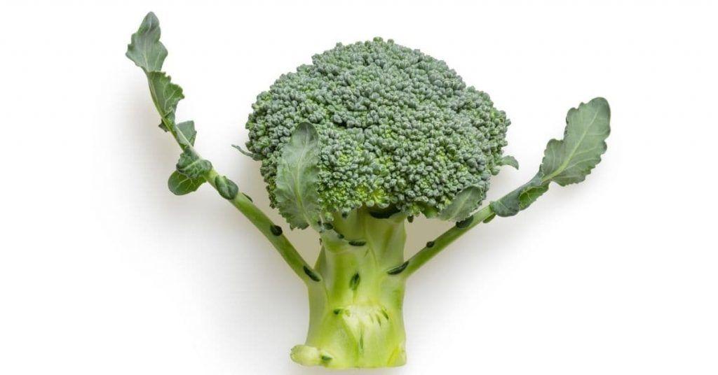 Calcio vegano alimentos necesarios en la dieta (brócoli)