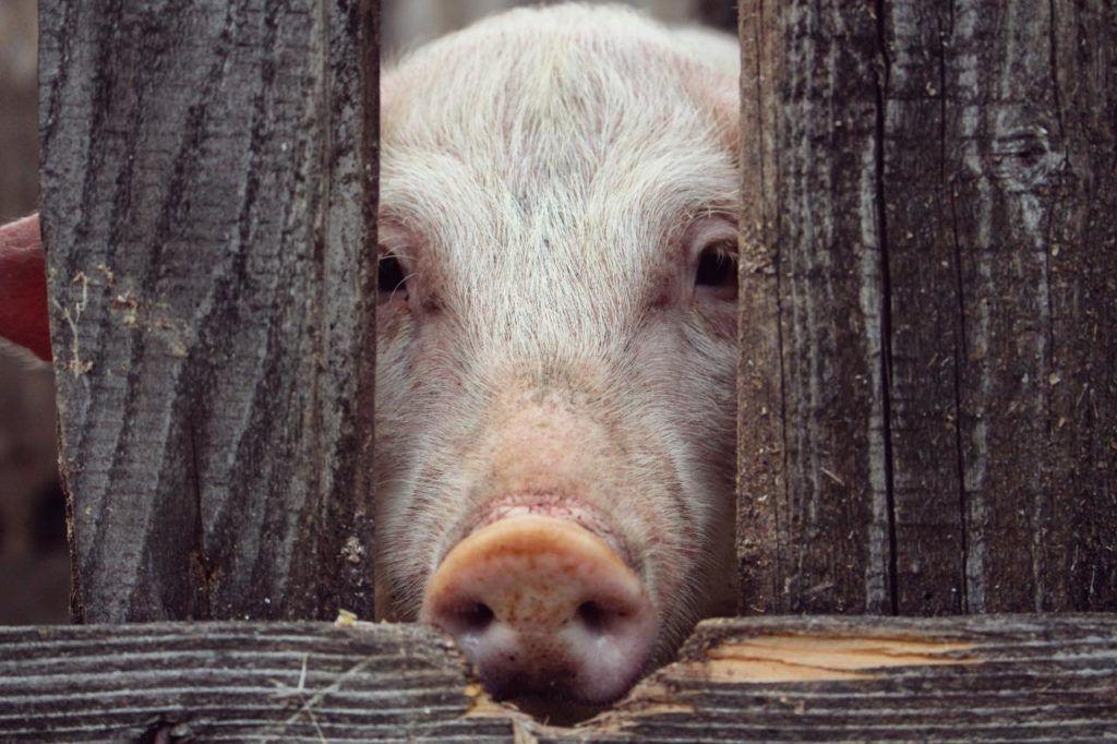 Cocina y Recetas veganas como Activismo por los animales