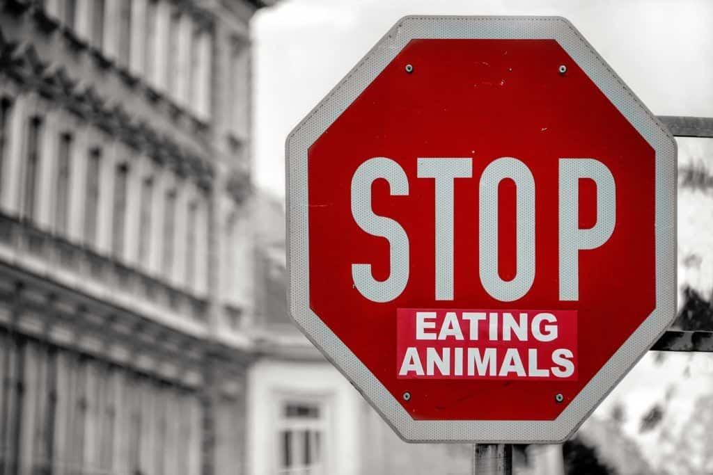 ¿Terminología carnista o lenguaje antiespecista? La liberación animal empieza por nuestras palabras.