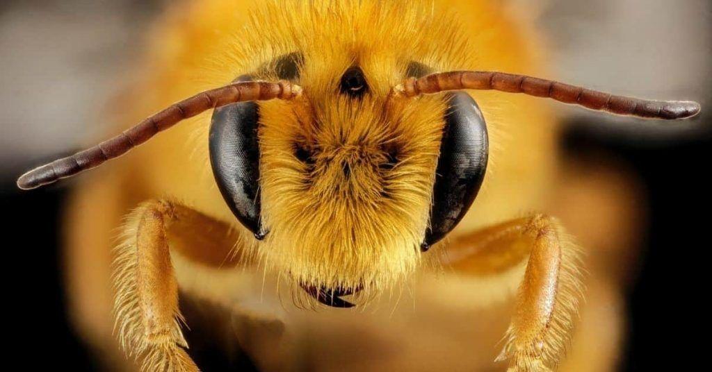 Miel vegana: ¿por qué los veganos no comen miel? Alternativas de origen vegetal