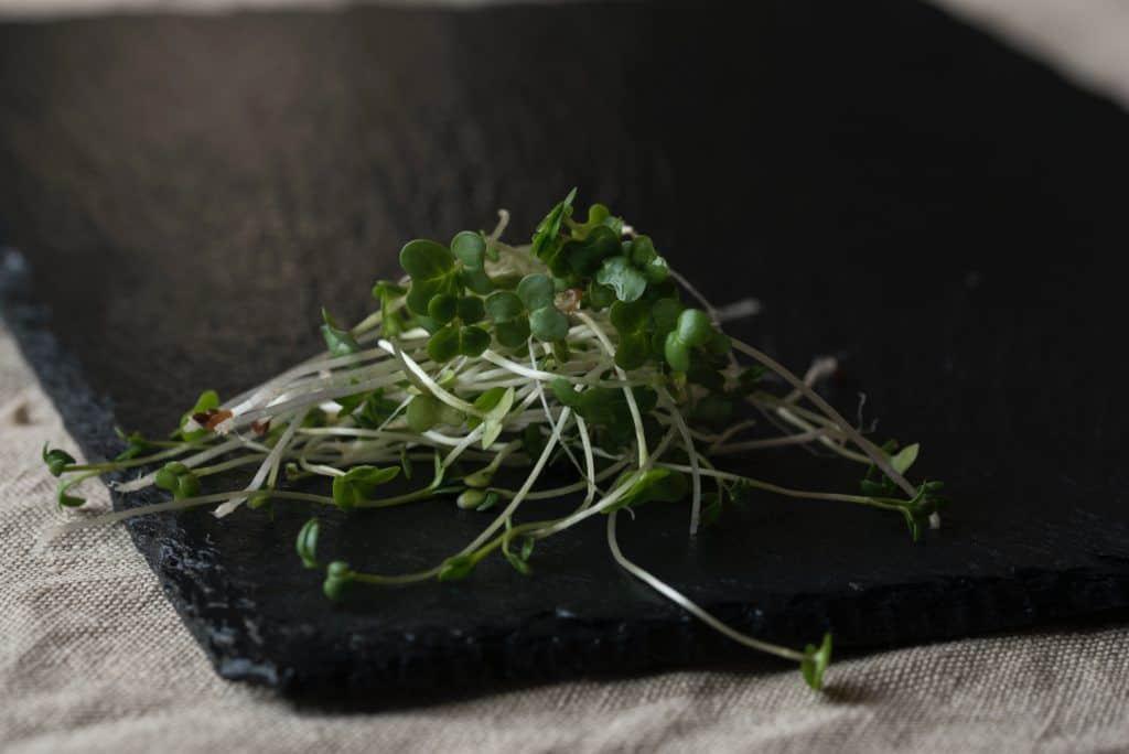 Beneficios de los germinados: tiernos, frescos y sabrosos!