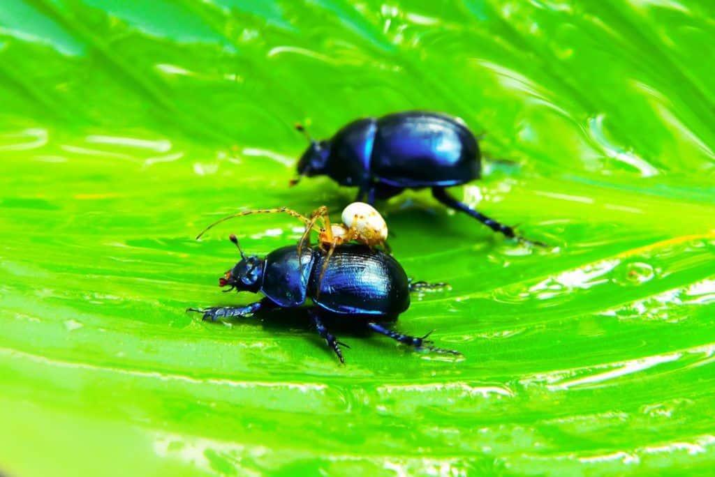 Los insectos sienten dolor y placer.