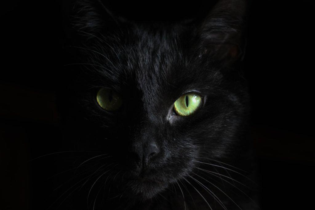 veganismo y los animales - respeto por todos los animales, no solo los gatos y los perros