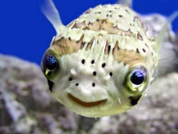 pez simpático y peligroso