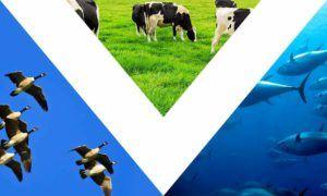 vegan flag 3 triangles